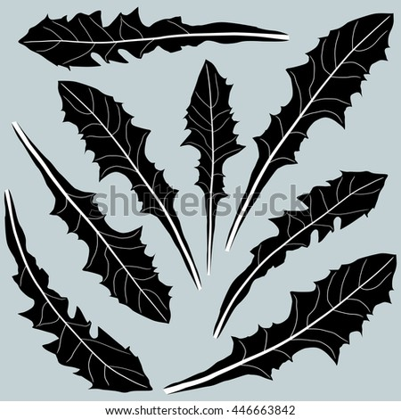 dandelion leaves in black and white on a light background - stock vector
