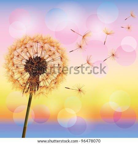 Dandelion, spring flower on background of sunset, vector illustration. Light nature background. Place for text - stock vector