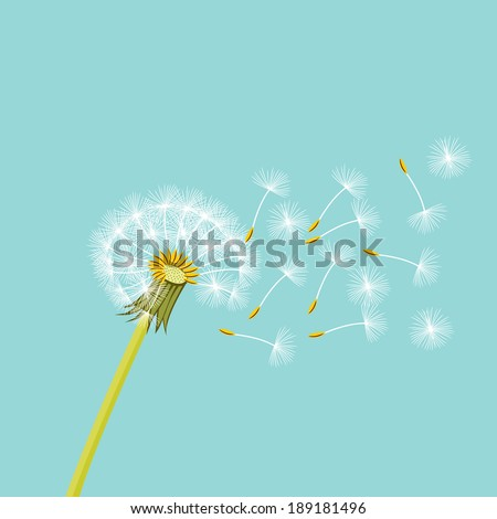 Dandelion with flying seeds in the air - stock vector