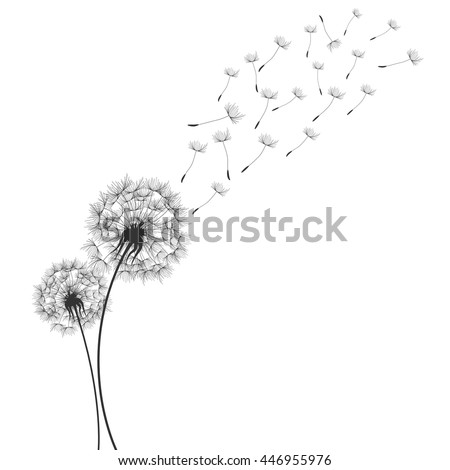 Dandelions  - stock vector