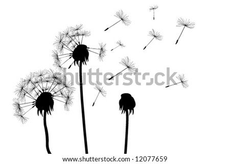 dandelions (for more see my port) - stock vector