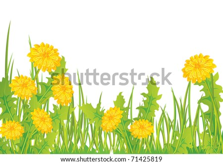 Dandelions in grass, isolated on white, vector