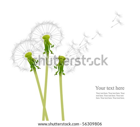 dandelions in the wind - stock vector