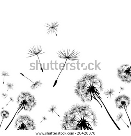 dandelions silhouettes in the wind - stock vector