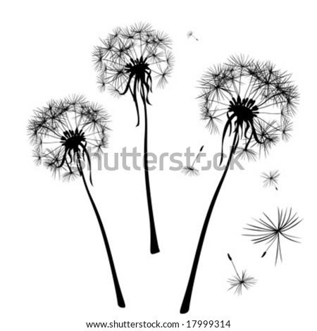 dandelions silhouettes in wind - stock vector