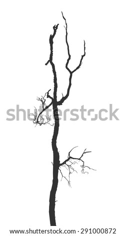 Dead branches. Vector Silhouette dry branch isolated on a white background - stock vector