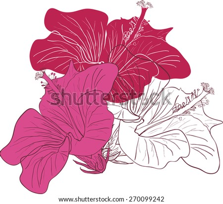 Decorative floral background with flowers hibiscus rose - stock vector