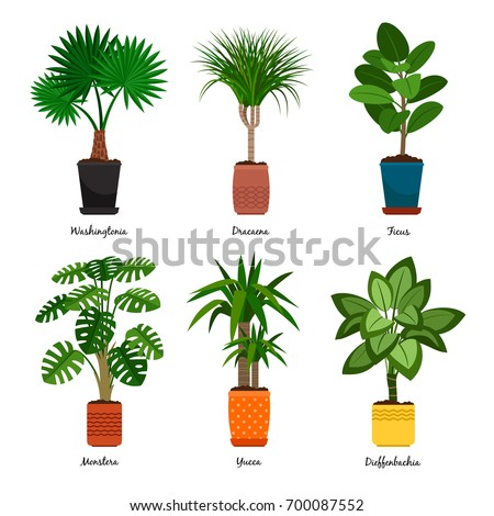 Decorative Houseplants In Pots Vector Illustration. Florist Indoor Palm  Trees And Interior Flowerpots Like Washingtonia