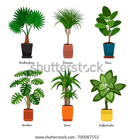 Decorative Houseplants In Pots Vector Illustration. Florist Indoor Palm  Trees And Interior Flowerpots Like Washingtonia