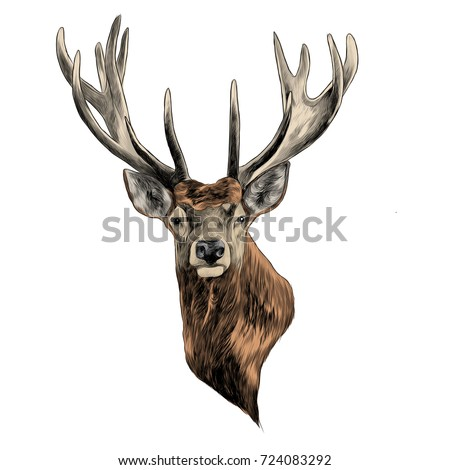 Drawings Of Deer Color Pages