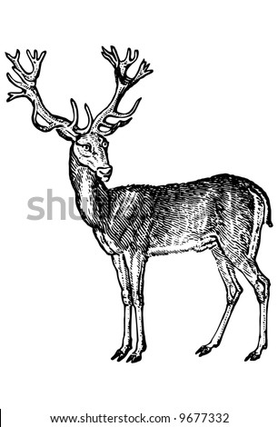 Deer in style of an ancient engraving - stock vector