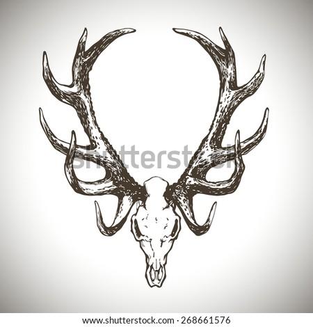 deer scull vector illustration - stock vector