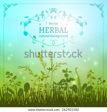 Delicate herbal background with a silhouette of grasses and fireflies bordered decorative floral border.                          - stock vector