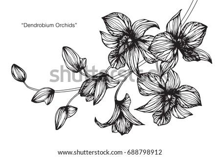 Орхидея графика рисунок 7