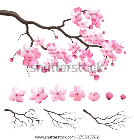 Design constructor japan sakura cherry branch with blooming flowers. Vector illustration