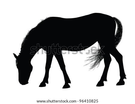 Detailed horse silhouette. Vector eps8 - stock vector