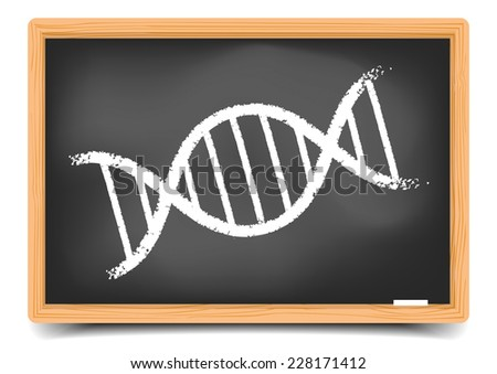detailed illustration of a blackboard with a DNA String, eps10 vector, gradient mesh included - stock vector