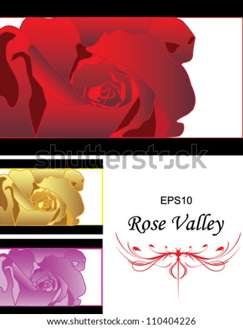 Detailed Rose vector combining multicolor - stock vector