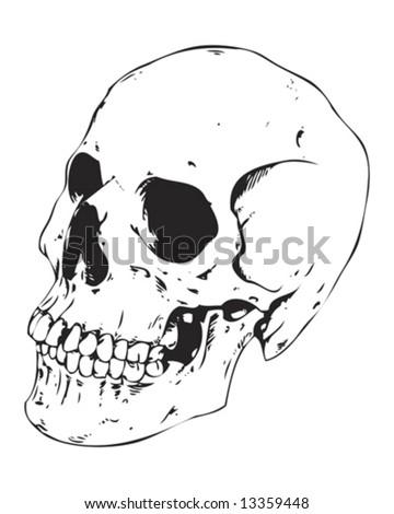 detailed side view skull - stock vector