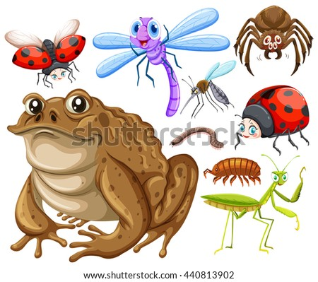 Different kind of insects illustration - stock vector