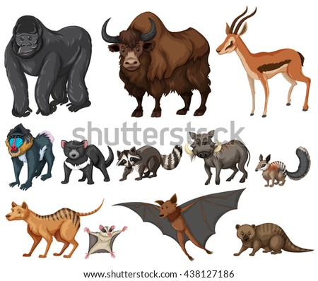 Different kind of wild animals on white illustration - stock vector
