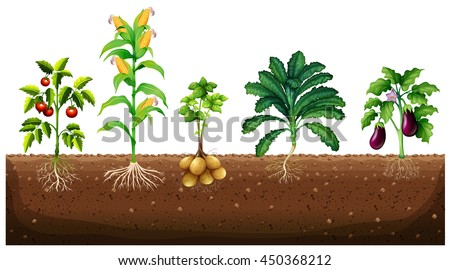 Different Kinds Of Plants Growing In The Garden Illustration