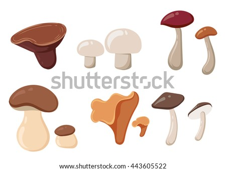 Different types of mushrooms set, vector illustration icons. Boletus isolated over white background colorful collection. - stock vector