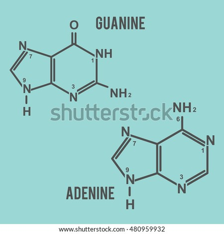 DNA adenine and guanine vector in eps 8