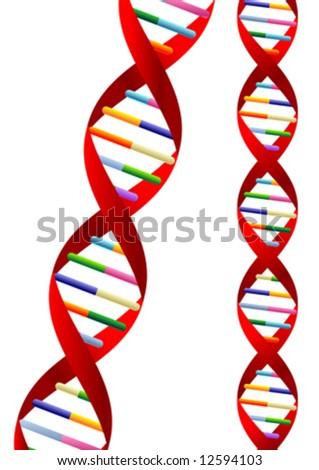 DNA helix representation isolated over white background - stock vector