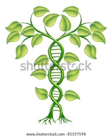 DNA plant concept, can refer to alternative medicine, crop gene modification. - stock vector