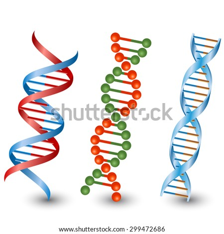 Dna strands. Vector on the white background - stock vector