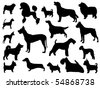 Dog breed - stock vector