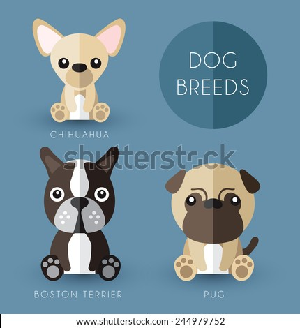 Dog breeds  - stock vector