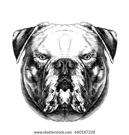 Dog Breeds American Bulldog Head Symmetry Vector de stock660187228 ...