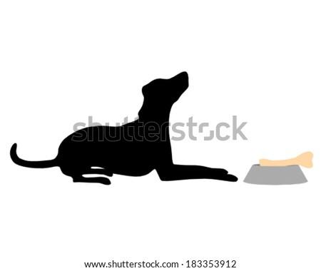 Dog feeding - stock vector