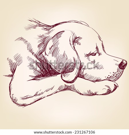 dog hand drawn vector llustration realistic sketch - stock vector