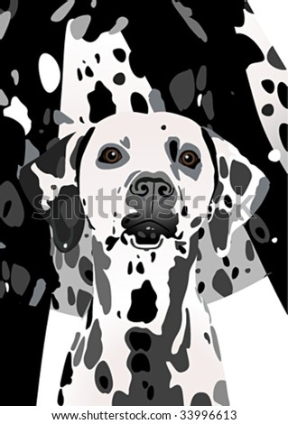 dog of breed of dalmatinec on the spotted background