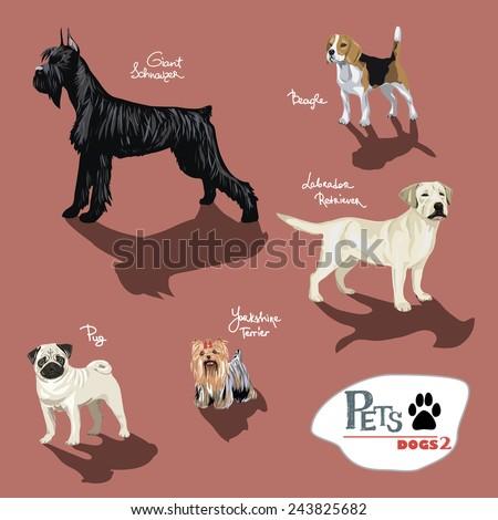 Dogs.Vector illustration set. - stock vector