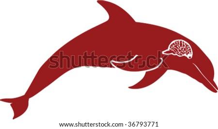 dolphins brain - stock vector
