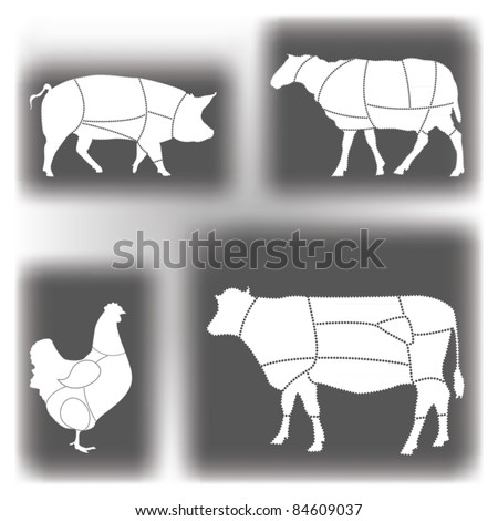 Domestic Animal Meat Diagrams - stock vector