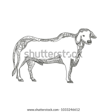 Doodle Art Illustration Brahman Brahma Bull Stock Photo Photo