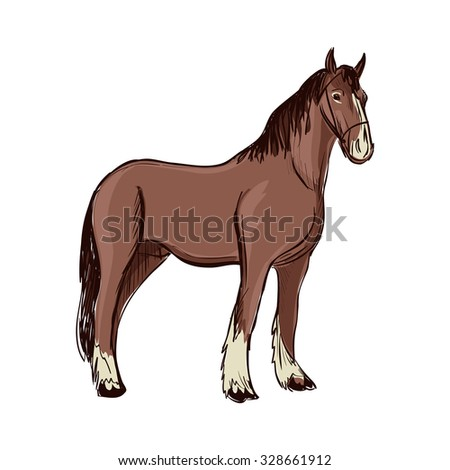 Doodle Horse. Isolated in white background. Excellent vector illustration, EPS 10