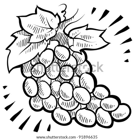 Doodle style fresh, juicy bunch of grapes illustration in vector format - stock vector