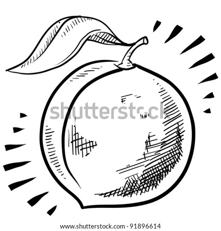 Doodle style fresh, juicy peach illustration in vector format - stock vector