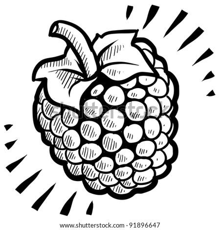 Doodle style fresh, juicy raspberry  illustration in vector format - stock vector