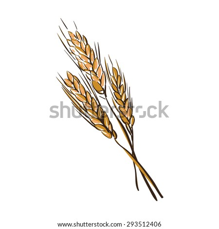 doodle wheat spikelets isolated on a White Background - stock vector