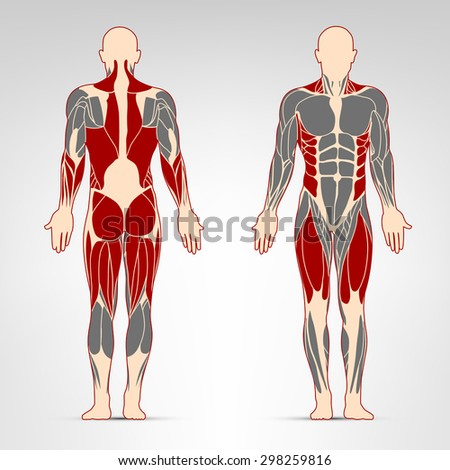 Dorsi, glutes, quadriceps, oblique and deltoid muscles. Fitness training, man muscles workout.