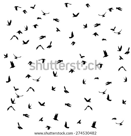 Doves and pigeons set for peace concept and wedding design. Flying birds sketch set. Vector
