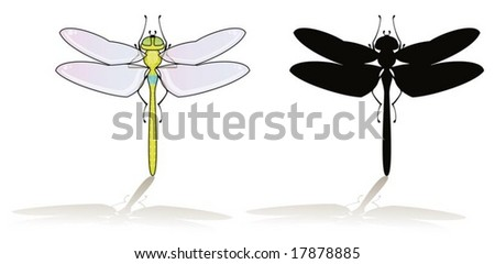 Dragonfly isolated on white with his silhouette