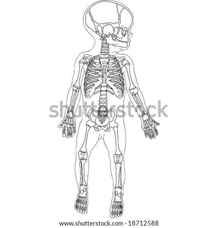 Drawing children skeleton - stock vector